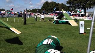 Kennel Club Festival Uk 2014 - Young Handler Agility Dog Of The Year