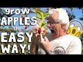 Grow Your Own Sugar Apple from Seed! - YouTube