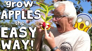 GROWING an Apple Tree from SEED to FRUIT! (2020)