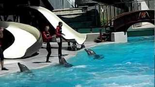 dolphin show marineland canada