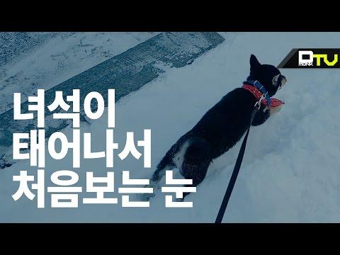 태어나서 처음보는 눈, 치프의 반응은? / puppy experiencing snow for the first time