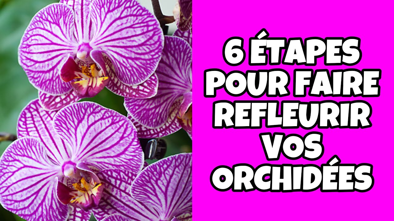 comment faire refleurir les orchid es youtube. Black Bedroom Furniture Sets. Home Design Ideas