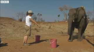 BBC News   Human gestures understood by elephants