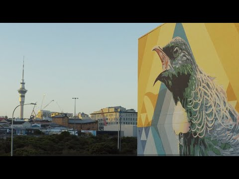 Converse City Forests - Auckland
