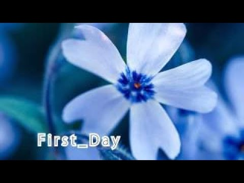 background music First Day | YouTube Audio Library | YouTube Audio Library