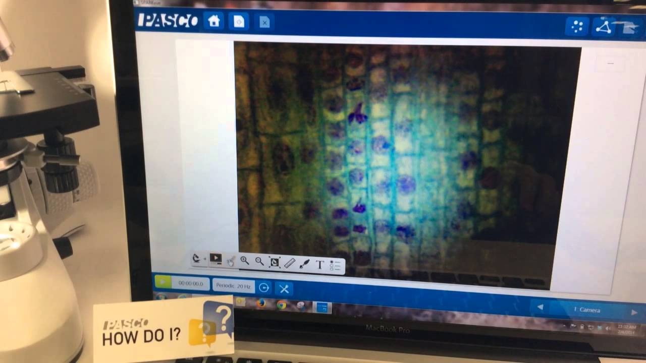 Capture images from a digital microscope or usb camera sparkvue