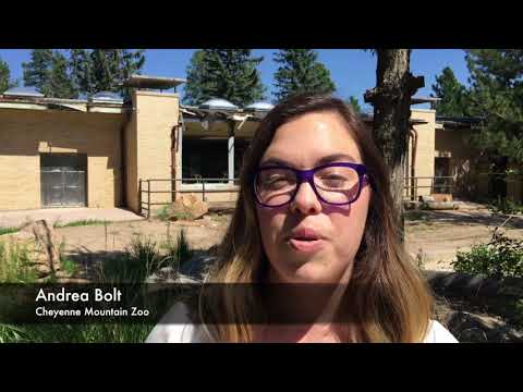 Cheyenne Mountain Zoo's push to the future in Colorado Springs