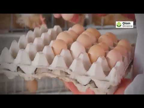 Olam invests in Nigeria's poultry, feed sectors