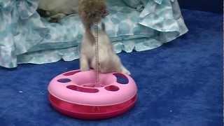 Трек с мячиком для кошек на ZooStar.com.ua