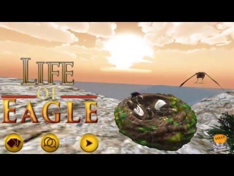 Life Of Eagle Hd