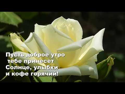 Утро,цветы ,вам    Хорошего дня