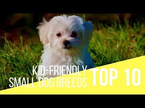 Good Family Dogs - Top 10 Kid-Friendly Small Dogs