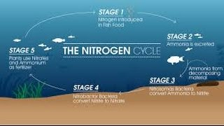 HOW TO: Cycle an Aquarium (Nitrogen Cycle)