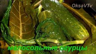 малосольные огурцы (горячий способ). salted cucumbers (hot method)