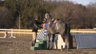 Part 1 Of The Retired Race Horse Thoroughbred Training Project With Eric Dierks.