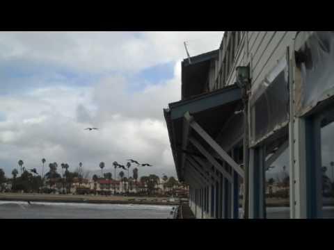 Waves and Sea Birds in Santa Barbara