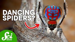 9 Amazing New Arachnid Species