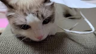 종이가방 속 고양이
