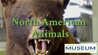 BVM Exhibits: North American Animals