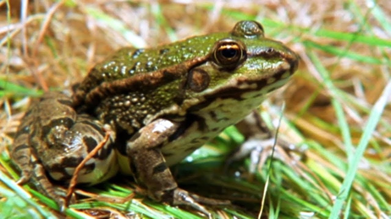 Facts About Frogs & Toads  - Secret Nature