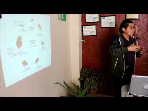 Chinches curso reproduccion biologia chinches de cama cimex Videos De Viajes