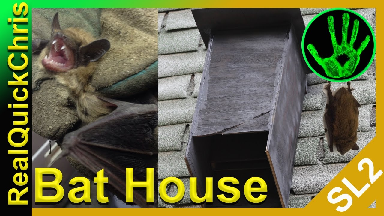 Bats In My Living Room How To Get Out Of Your House And Attic With A Diy Bat