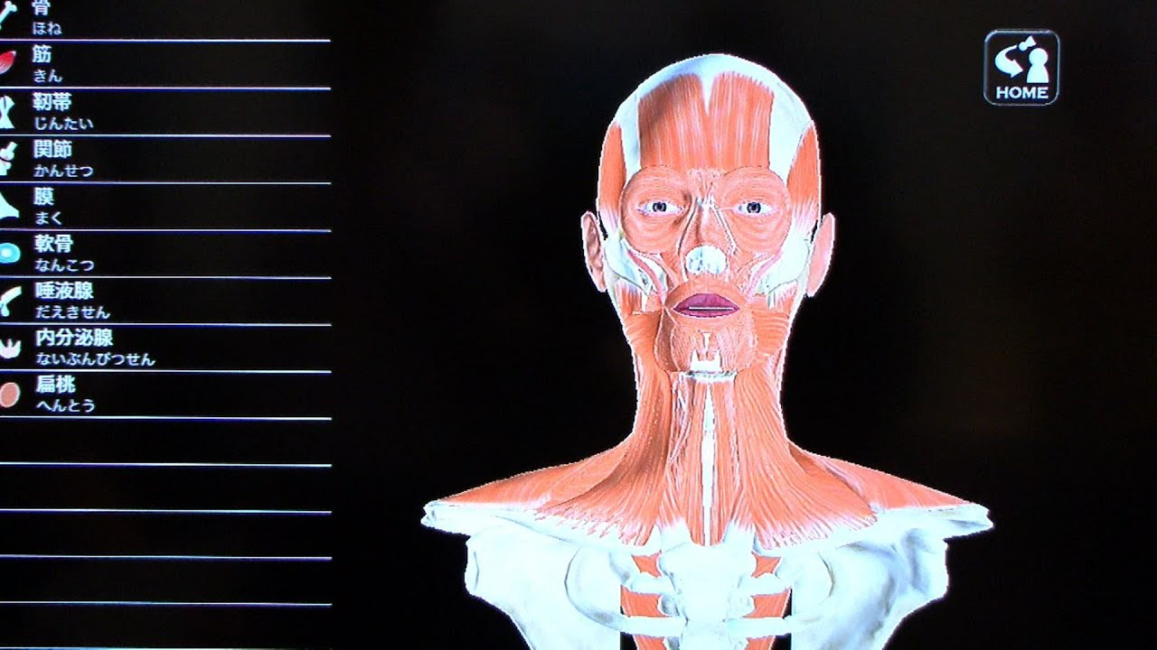 iPad App Recreates 3D Anatomy in Fine Detail #DigInfo - YouTube