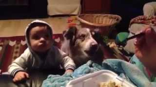 Собака, которая говорит - Мама