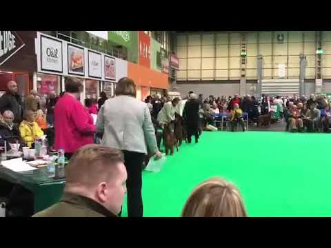 Crufts Post Grad Dog 2019 Sarah Tupper