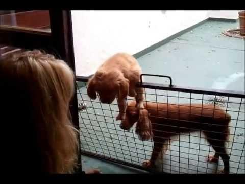 Una cachorrita subiendo una reja... ¡qué ágil!