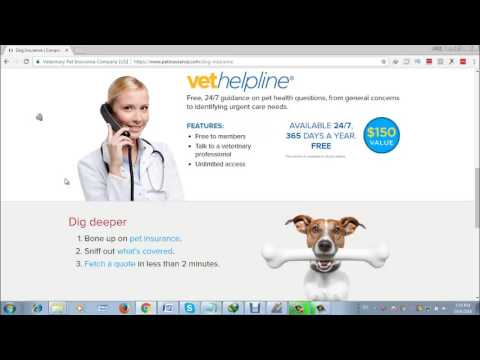 insurance for dogs