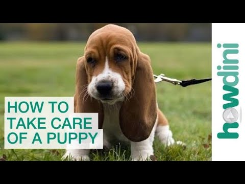 how-to-take-care-of-a-puppy:-bringing-a-puppy-home