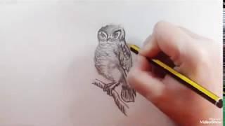 How to draw an Elf Owl (speed) - Como dibujar un Mochuelo Duende (rápido)