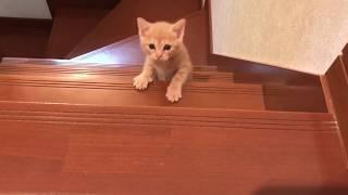 階段を登りきった子猫が満足そう  Kitty climbed the stairs thumbnail