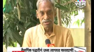 Organic farming tips for Sugarcane crop Farmers by Sushash Palekar