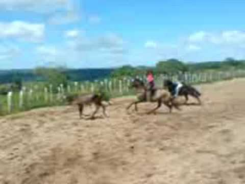 Fazenda Santa Tereza Travel Video