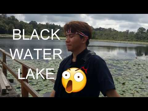 BLACK WATER LAKE!!? - Tasek Merimbun, Brunei