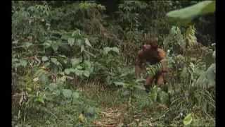 le Robinson de l'île mystérieuse