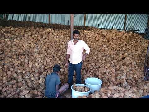 INDIAN FRESH POLLACHI COCONUT EXPORT(7)