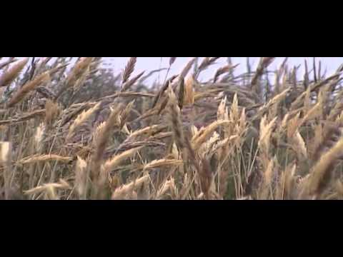 Watch Veronica Guerin full movie online free – 123Movies