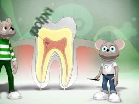 1   la vita dei denti
