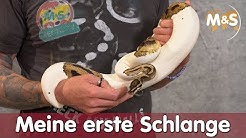 Meine erste Schlange? | Welches Tier passt zu mir? | Reptil TV
