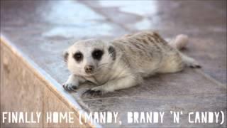 Flitz&Suppe - Finally Home (Mandy, Brandy