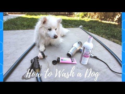 How to Wash a Dog: Dog Bath in 8 Steps