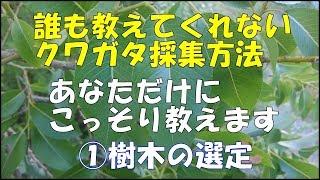 誰も教えてくれないクワガタの採集方法シリーズ ①樹木選定 クワガタを、...
