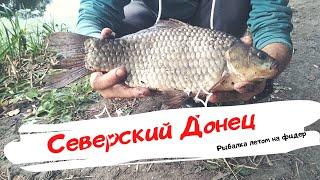 Северский Донец рыбалка летом