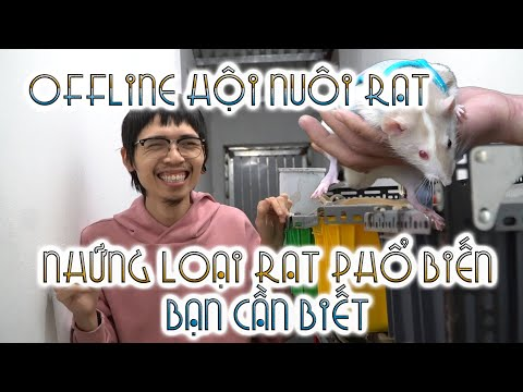 Offline hội nuôi chuột Rat  Những loại RAT cơ bản bạn nên biết | WILDVN TV