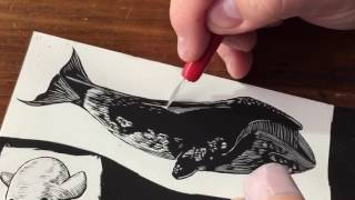 Scratchboard Illustration of a Bowhead Whale