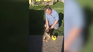 В Челябинске спасают раненного пьяным взломщиком тигренка