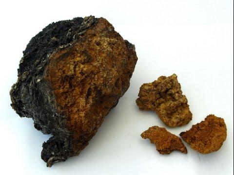 Что лечит берёзовый гриб чага, народные средства из чаги